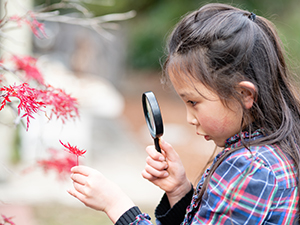 Girl looking at a red maple leaf with a magnifying glass