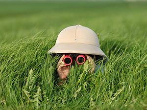 Young boy in tall grass looking through binoculars.